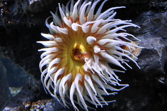 Beautiful underwater plants and animals picture of for Plants that live long