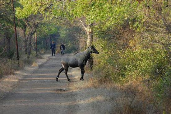 Bhavnagar, India: Victoria Park
