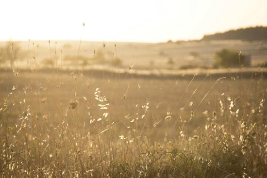 Il Pino Grande: I nostri campi