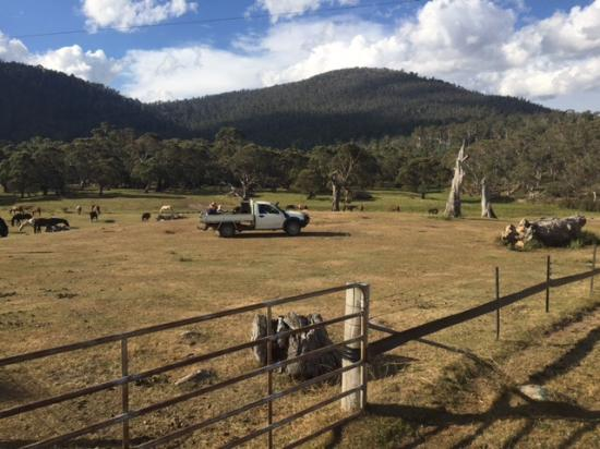 Crackenback, Australia: Feeding the horses on the back of the ute after a gorgeous horse ride even seeing kangaroos!