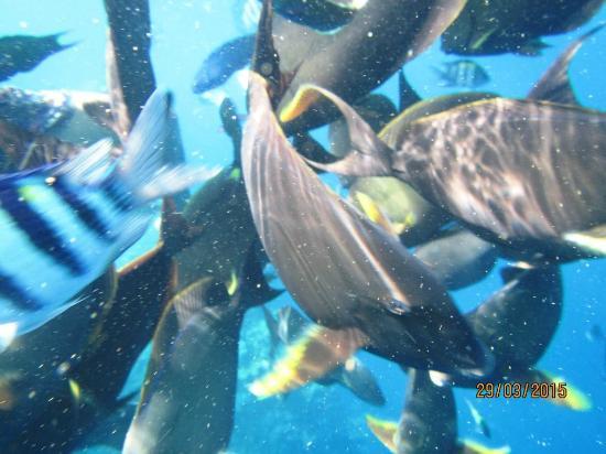 Download 64+ Gambar Ikan Besar HD Terbaru