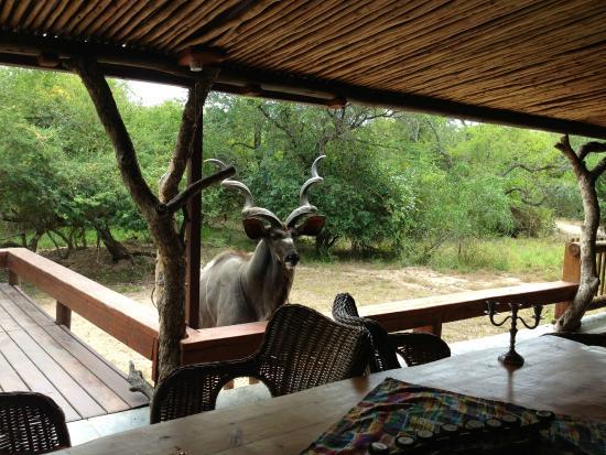 Khaya Umdani Guest Houses: Outside Area