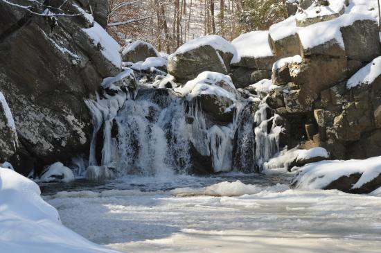 Scott's Run Nature Preserve: Look at what's waiting for you!