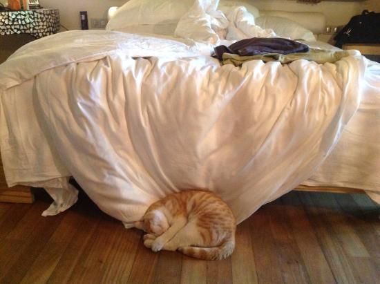 Constance Moofushi: Fushi beim Mittagsschlaf