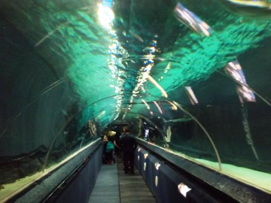 Gift shop. - Picture of Kelly Tarltons Sea Life Aquarium, Auckland ...