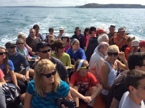 Pembrokeshire Guided Tours - Day Tours: Boat to Skomer