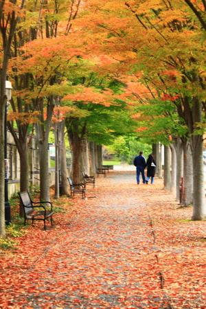 Πρίνστον, Νιού Τζέρσεϊ: Princeton University