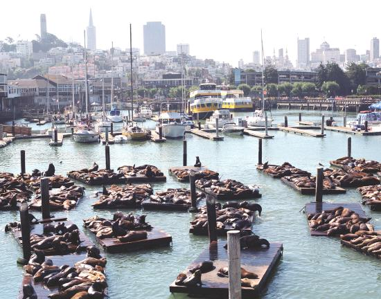 San Francisco, Californien: Spend the day at PIER 39 and visit the hundreds of sea lions that call this place home.