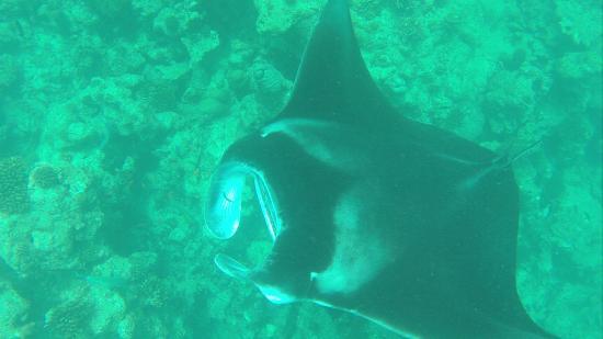 Kethi Lodge: Snorkeling
