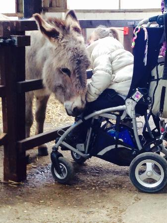 Colemans Farm Park: Ginny the donkey is fantastic with everyone