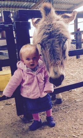 Colemans Farm Park: Zara and Ginny the donkey