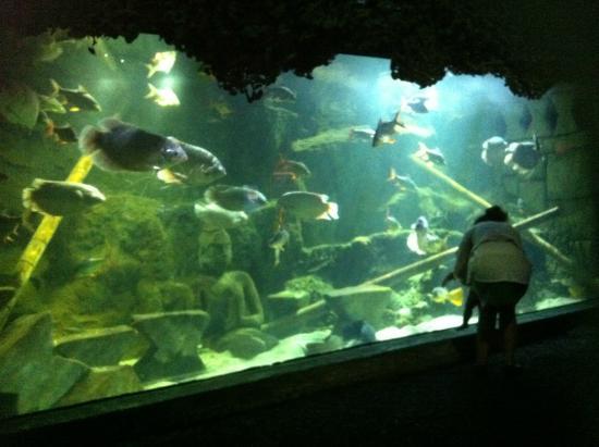 the best aquarium picture of sea aquarium tripadvisor