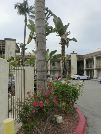 Anaheim Express Inn: lindo entorno