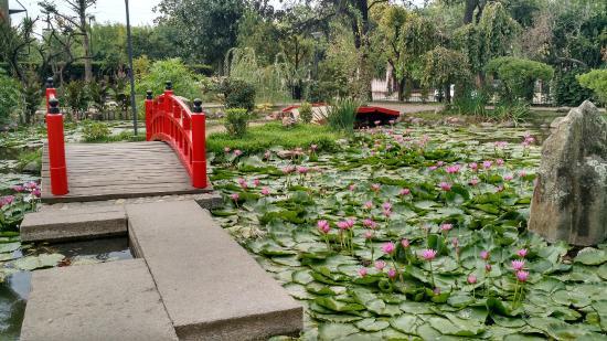 Foto de jardin japones buenos aires 04 lago tripadvisor for Jardin japones palermo