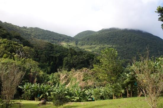 Trois Rivieres, Guadeloupe: un magnifique parc