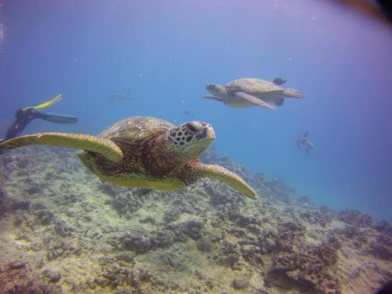 Manini Dive Company: Turtle Reef Canyon