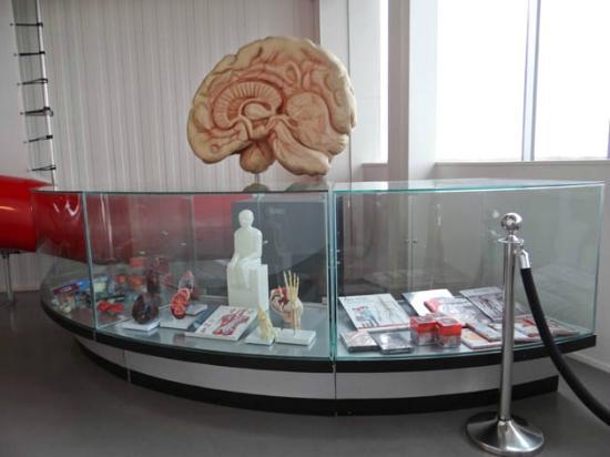 CORPUS 'journey through the human body': brain