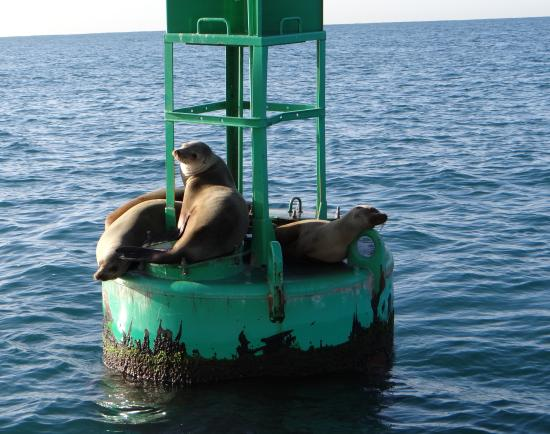 Dana Point, CA: Just some sea lions relaxing on this fine day.
