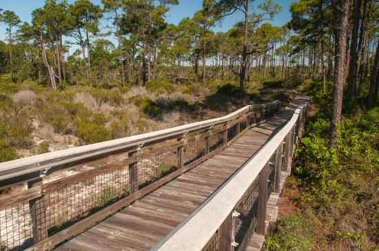 Saint George Island State Park : Nature trail in island forest