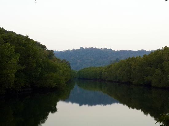 Mangrove Bungalow