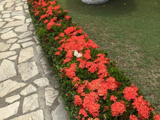 Hostel Pousada Do Ingles : Flowers are fabulous.  Here is a butterfly but there are monkeys and hummingbirds too