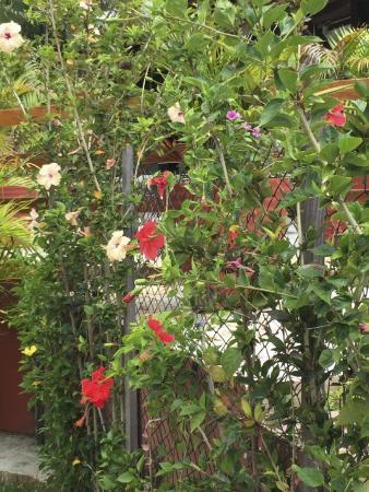Hostel Pousada Do Ingles : more lovely flowers