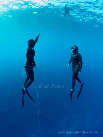Apnea Australia: Freedive Courses in Sydney and around Australia