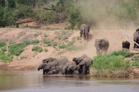 Mfubu Lodge and Gallery : Elephants at Mfubu