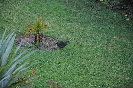 Tiki Tiki Ora: Weka Bird