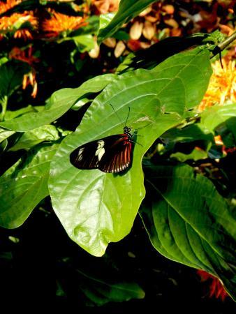 Frederik Meijer Gardens U0026 Sculpture Park: Butterfly Exhibit
