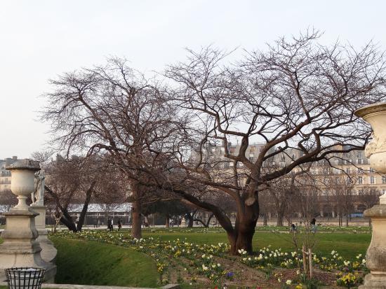 Il giardino delle tuileries picture of jardin des for Jardin des tuileries