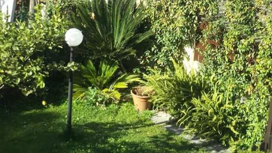 Greenhouse Bed & Breakfast: foto giardino