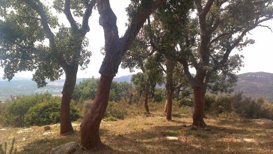 Parque De Los Alcornocales