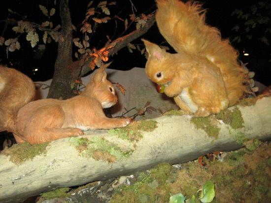 Bowness-on-Windermere, UK: Red squirrels