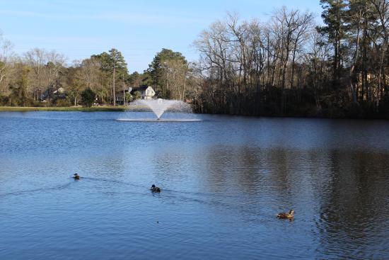 Chesapeake House : View of pond behind restaurant!