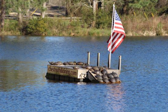 Chesapeake House : Turtles sunning on the dock!