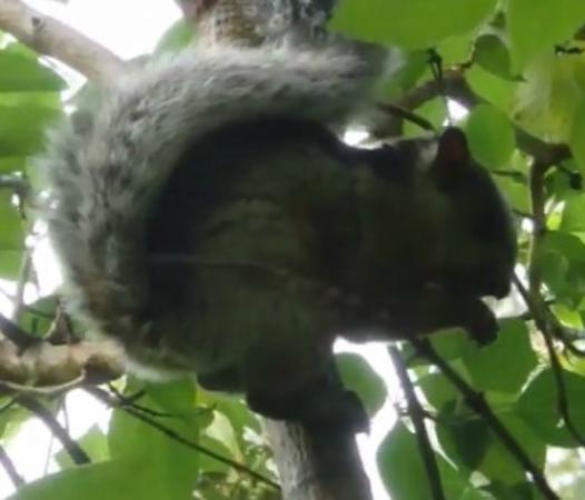 Sleepers Sleep Cheaper Hostel: écureuil à Curi Cancha grâce à l'hôtel