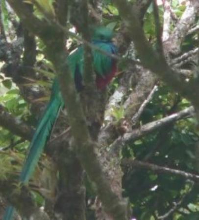 Sleepers Sleep Cheaper Hostel: Le fameux Quetzal vu à Curi Cancha gràce à l'hôtel
