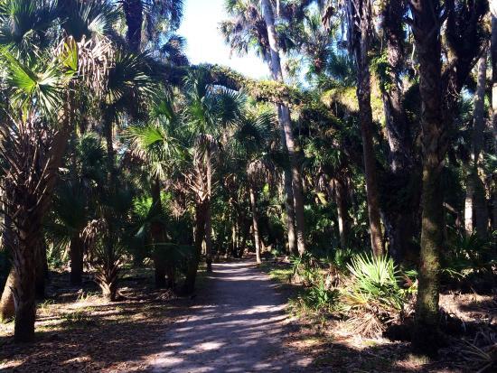 Myakka Canopy Walkway : Great walking paths