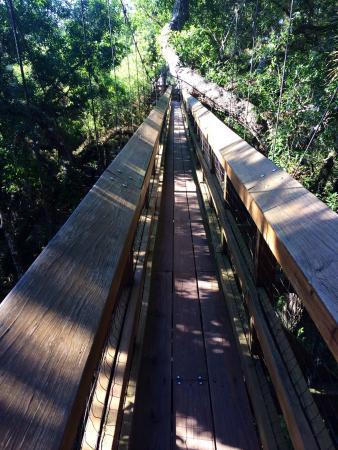 Myakka Canopy Walkway : Very cool