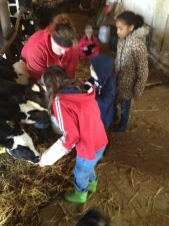 Verdant View Farm Bed and Breakfast: feeding the calves
