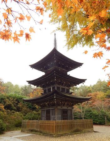 Zensanji Temple : 大銀杏の紅葉が映える三重の塔