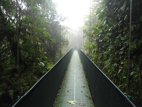 Santa Elena Skywalk : ponte 4
