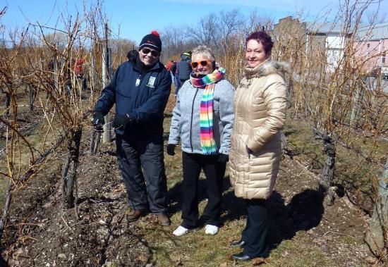 Strewn Winery: Pruning Strewn's Vines