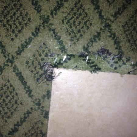 Quality Inn At The Mall: Carpet patched with office staples.