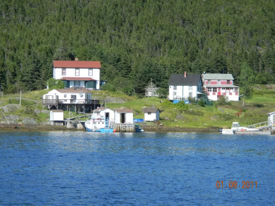Lewisporte, Канада: A view of some of the houses in Exploits.