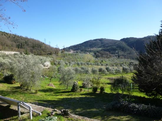 Agriturismo Verde Oliva: the view from the fattoria
