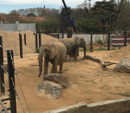 Elephants photo de barcelona zoo barcelone tripadvisor for Elephant barcellona
