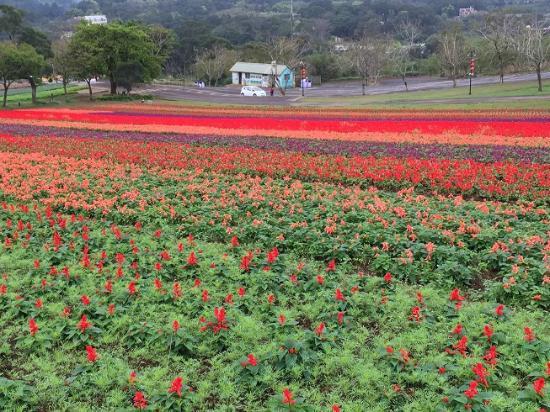 Lavendar Cottage: flower field
