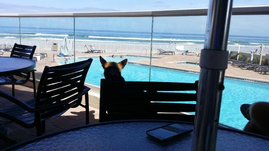 At The Sitting Area Above The Pool At Bar Pet Friendly Too - Daytona beach oceanfront house rentals